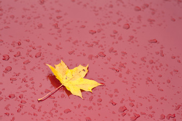 red paint on car with leaf and raindrops