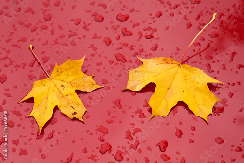 part of red car with raindrops and two leaves