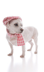 Trendy dog wearing winter cap and scarf