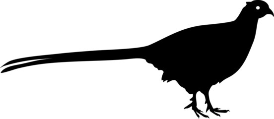 Silhouette of Common Pheasant