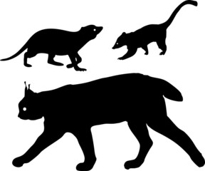 Silhouettes of lynx, meerkat and coati