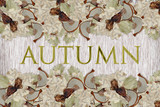 Background from autumn leaves and dried mushrooms.