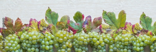 Fruit panorama with ripe grapes and colorful leaves