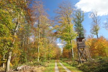Waldweg im Herbst mit Jägersitz / Schönbuch