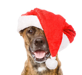Large dog in red christmas Santa hat. isolated on white