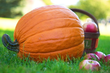 Pumpkin and apples on the farm field