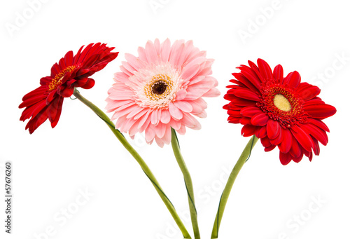 bouquet of gerbera isolated