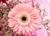 Różowa gerbera - 57676621
