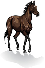 Vector of brown horse
