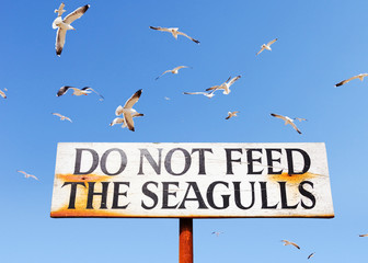Seagulls Fly Above Do Not Feed Seagulls Sign