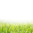 fresh green grass with water drops and copy space