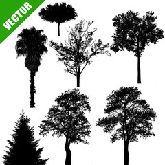 Various trees on white