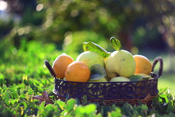 persimmons and quinces in basket with green background