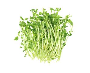 Fresh Pea Sprouts