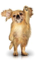 Cane che saluta