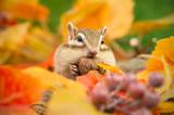 秋のシマリス