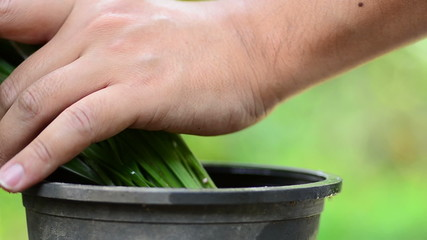 Male hand fertilizing plant in pot