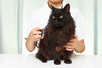 猫を診察する獣医