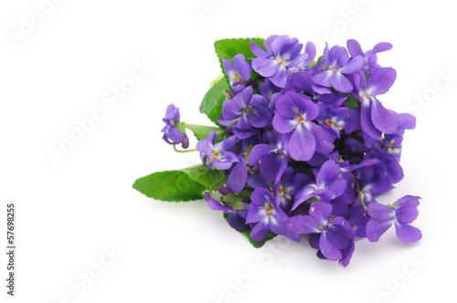 Violet flowers bouquet