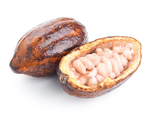 raw cocoa pod and beans isolated on a white