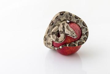 serpente su mela