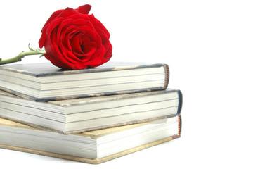 Rosa y libros