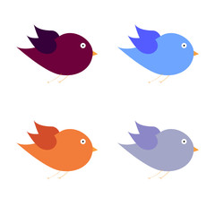 beauty bird color art vector illustration