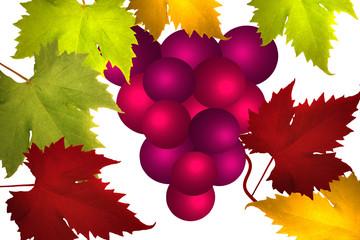 Vigne - Grappe de Raisin noir