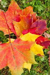 Bunte Herbstblätter im Gras