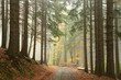 Path through coniferous forest on a foggy autumn day