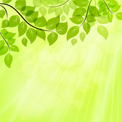Bright green summer vector background