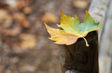 real scenario autumnal leaf poster