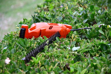 pruning tool on green shrub