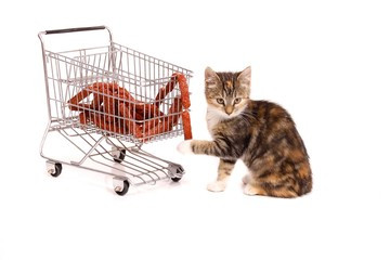 sitzende Katze mit Einkaufswagen