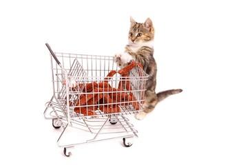 junge Katze beim Einkaufen