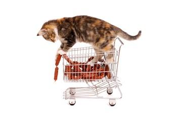 junge Katze im Einkaufswagen