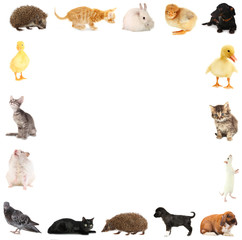 Collage of different cute animals in form of framework