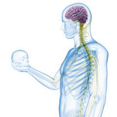 guy holding skull - visible brain and nerves