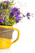 Beautiful bouquet of wildflowers in cup, isolated on white