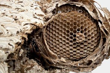 Hornissen-Nest-1