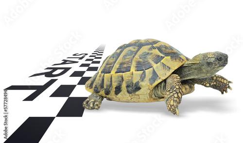Poster Schildpad Durchstarten