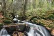 Chute d'eau en forêt