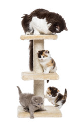 Group of cats playing on a cat tree, isolated on white