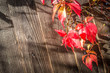 background of autumnal virginia creeper leaves