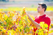 Mediterranean vineyard farmer checking grape leaves