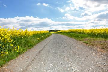 Dirt road between fields of rape