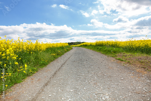Dirt road between fields of rape