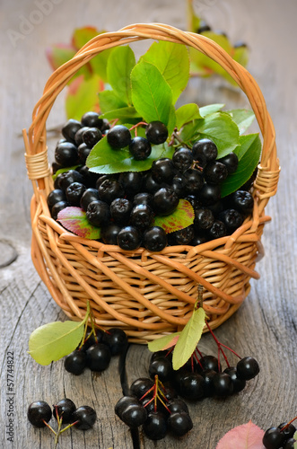 Black chokeberry in the basket