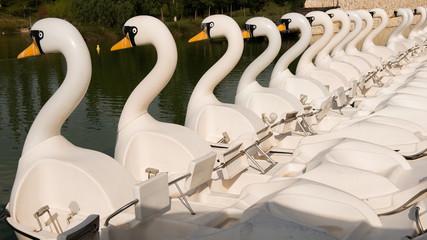 Barcas De Pedales Con Forma De Cisne. Valencia. España