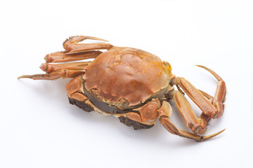 Boiled crab on white background